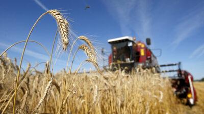 Господдержка в виде субсидий для сельхозпроизводителей